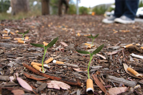 cigg-seeds-02