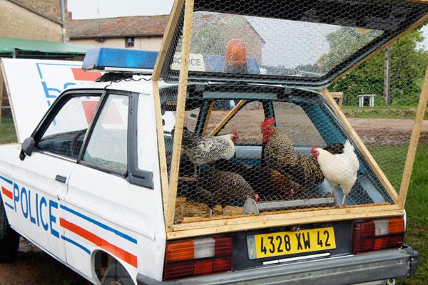 benedetto-bufalino-transforms-a-1970-police-car-into-a-chicken-coop-02