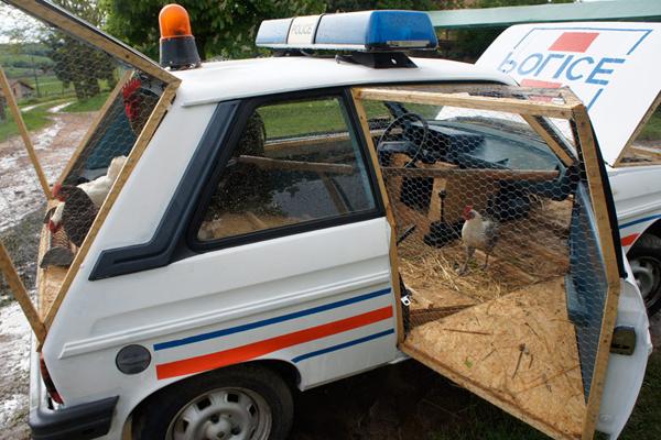benedetto-bufalino-transforms-a-1970-police-car-into-a-chicken-coop-04