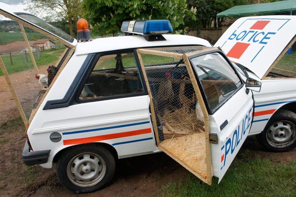 benedetto-bufalino-transforms-a-1970-police-car-into-a-chicken-coop-05