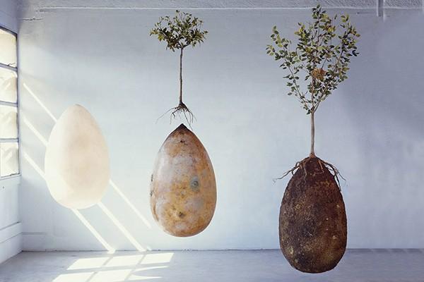 biodegradable-burial-pod-capsula-mundi-01